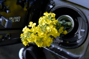 Die Bundesregierung forcierte die Einführung des Biokraftstoffs E10.