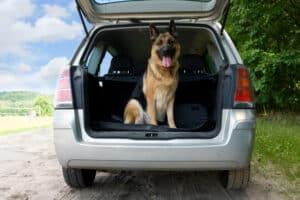 Sie müssen Ihren Hund nicht anschnallen, aber entsprechend sichern.