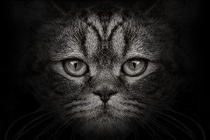 Katze überfahren: Liegt eine Fahrerflucht vor?
