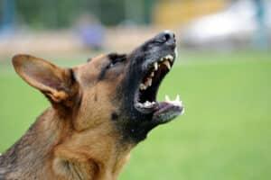 Ein Schmerzensgeld beim Hundebiss in die Wade kann hoch ausfallen.