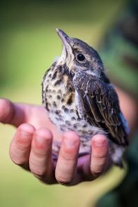 Manchmal nisten Vögel in dem Starenkasten, der als Blitzer-Attrappe fungiert.