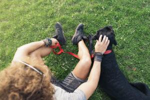 Haben Sie ein Tier überfahren, liegt keine Meldepflicht vor - auch nicht bei einem Haustier.